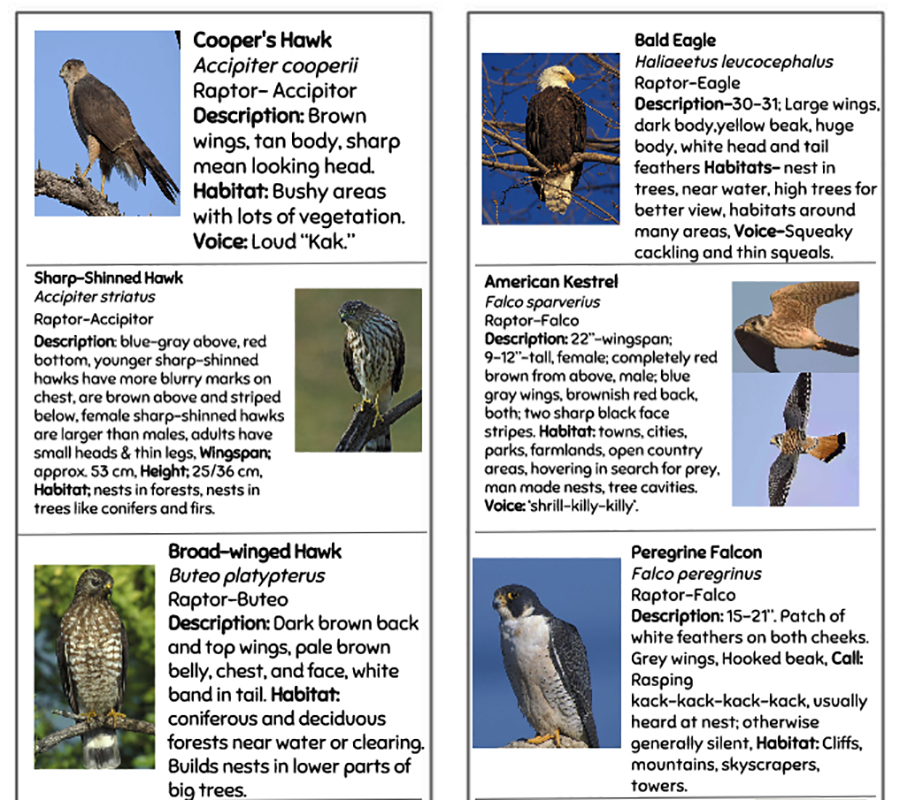 Bird is the Word | Models of Excellence