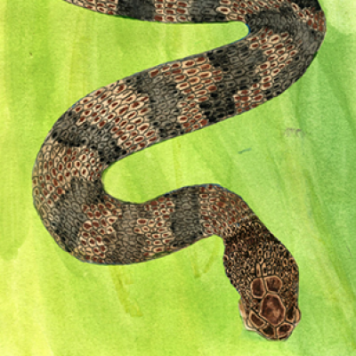 Slithering Snake Stories