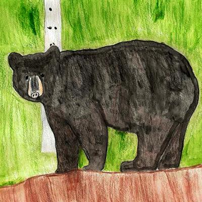 Wild Muir Picture Book Bear