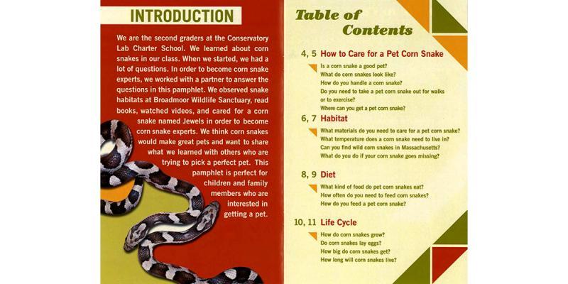 a question  u0026 answer pamphlet about pet corn snakes