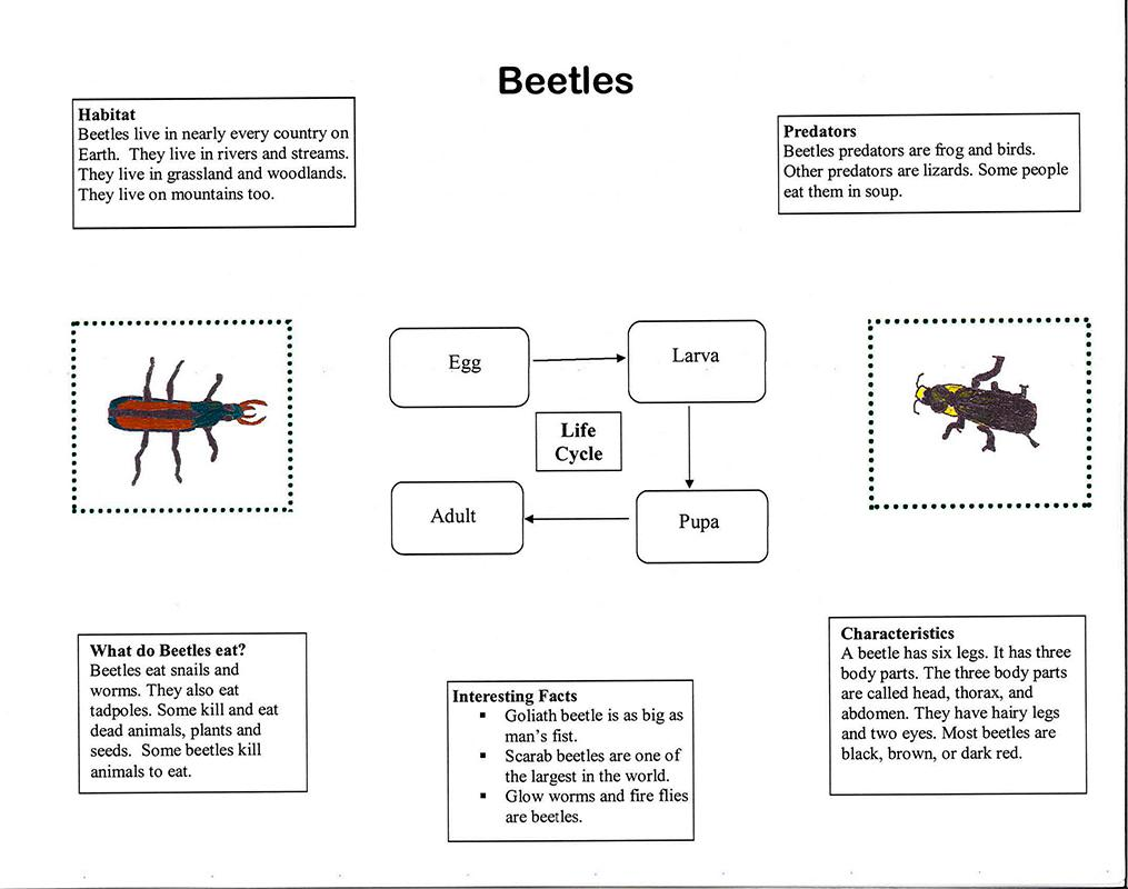 Field Guide to Insects