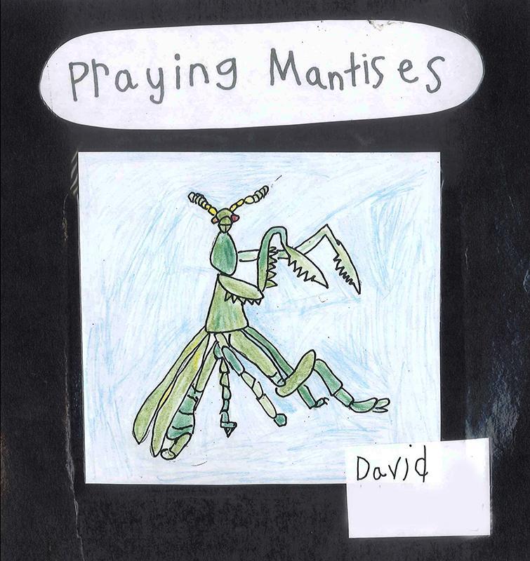 Praying Mantis 1