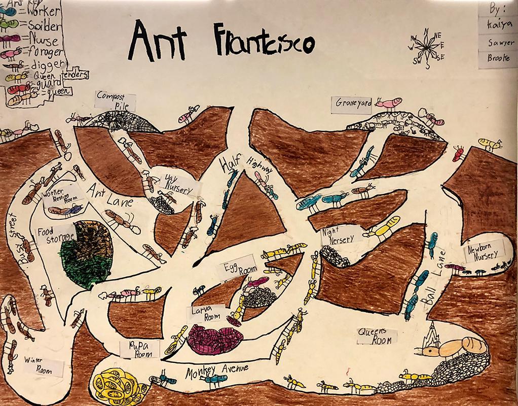 Ant Maps 1