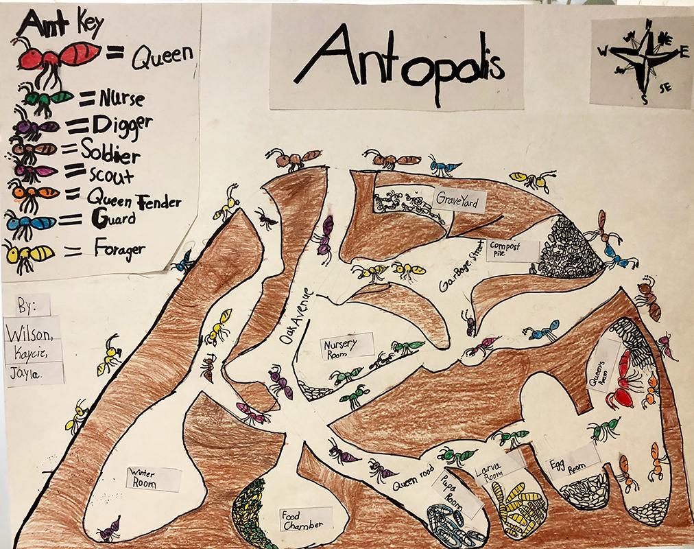 Ant Maps 2