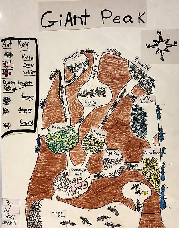 Ant Maps 8