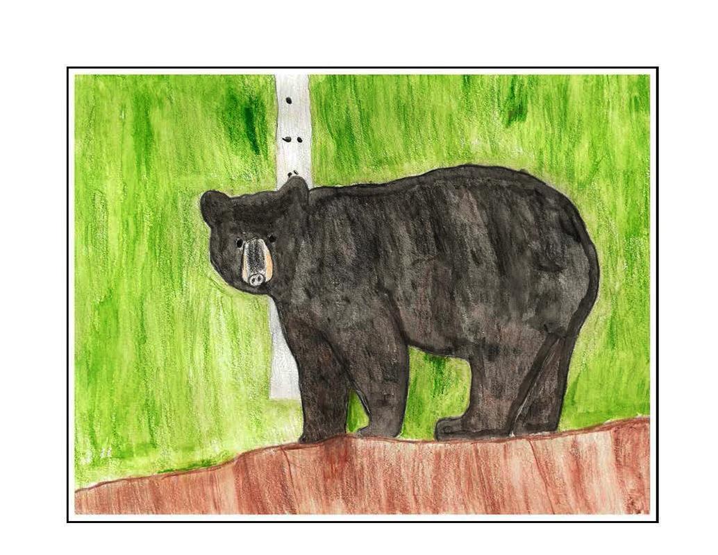 Wild Muir Picture Book