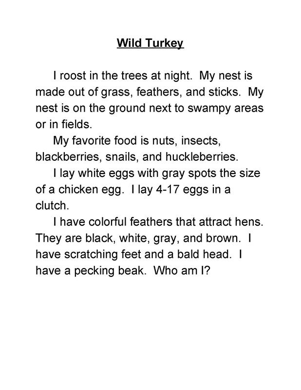 Mystery Bird Game