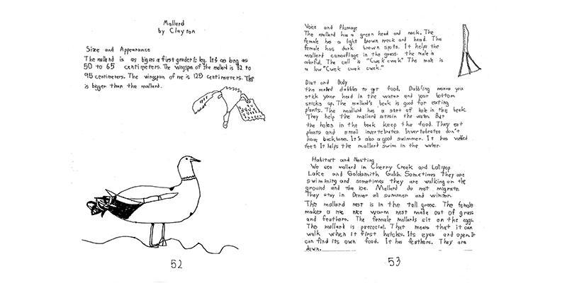 RMSEL Birds 2