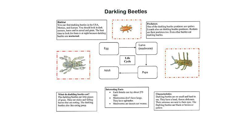 The Bug Book - US EPA